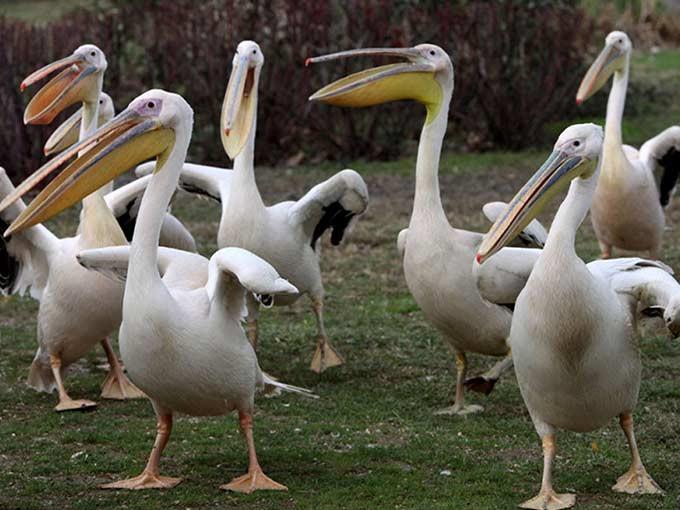 Bursada tür çeşitliliği