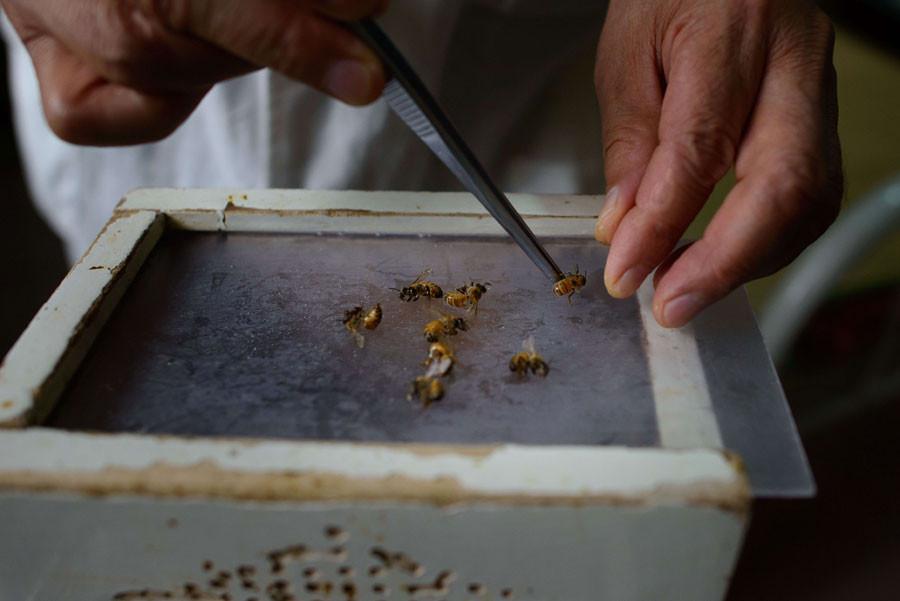 Kansere karşı arı sokması
