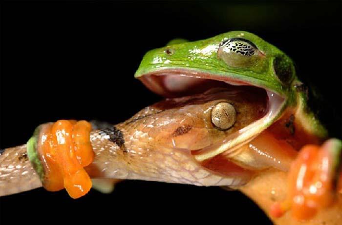 Tüm zamanların en iyi hayvan fotoğrafları