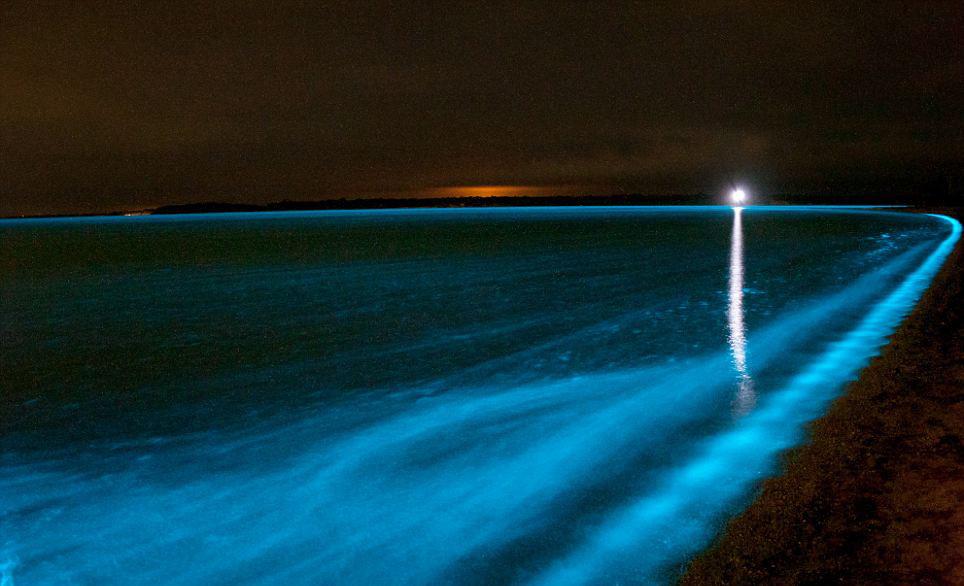 Kıyıda şaşırtan manzara