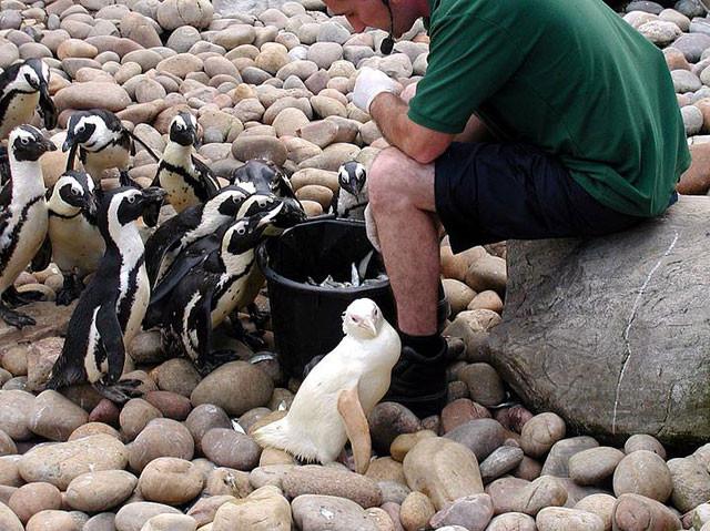 Albino hastalığı olan hayvanlar