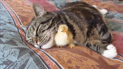 Umulmadık dostluklar