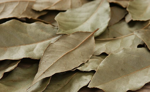 Defne yaprağı mucizesi