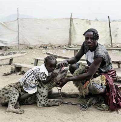 Afrikalıların evcil hayvanları !