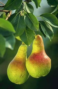 Kış meyve ve sebzelerin faydaları