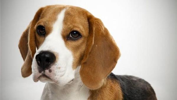 Çocuklarla en iyi anlaşan 10 köpek türü
