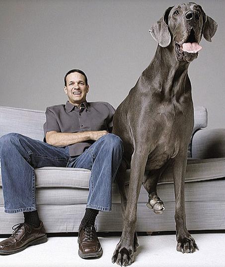 Dünyanın en uzun köpeği 8 yaşında öldü