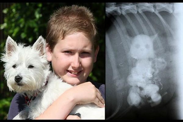 Akıl almaz röntgen görüntüleri!