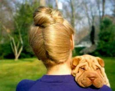 Sahibine benzeyen köpekler