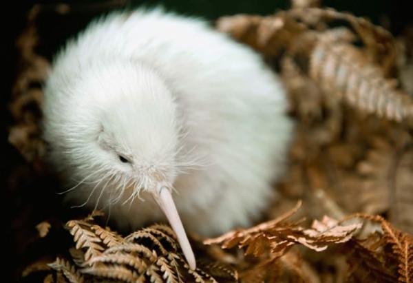 Beyaz hayvanlar