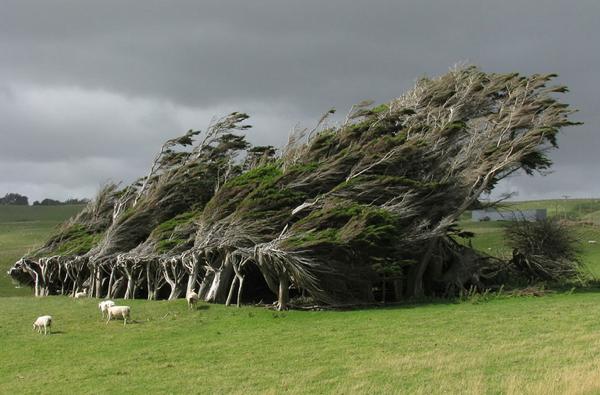 Rüzgardan gelen güzellik