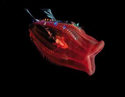 Okyanusun derinliklerindeki canavarlar !