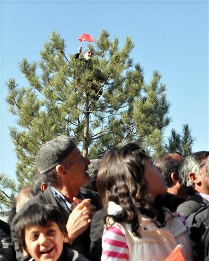 Gül, ağaca çıkan 85lik Halil Dedeyi uyardı