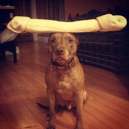 Dünyanın en dengeli köpeğiyle tanışın