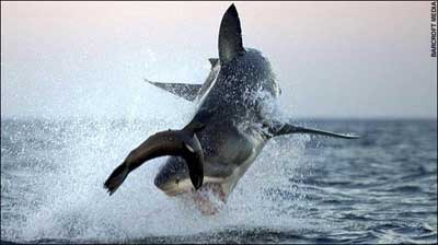 Denizlerin en vahşi avcısı
