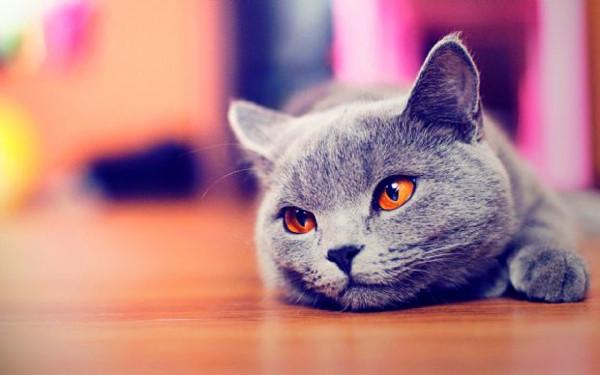 Kediler sahibini nasıl tanıyor?