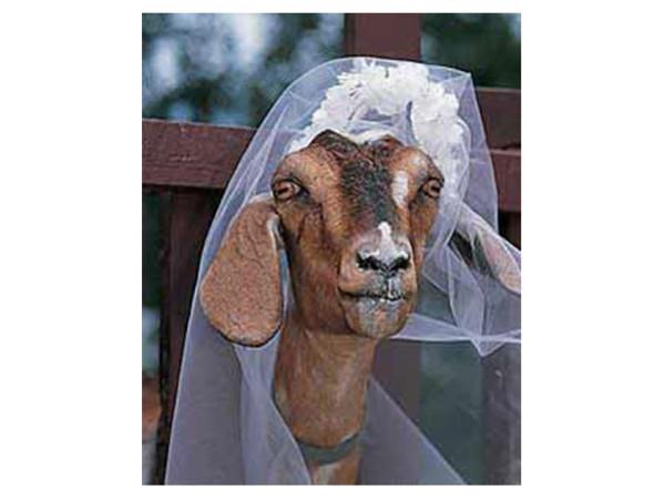 Dünyanın en akıl almaz evlilikleri
