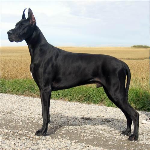 Dünyanın en güçlü 15 köpeği