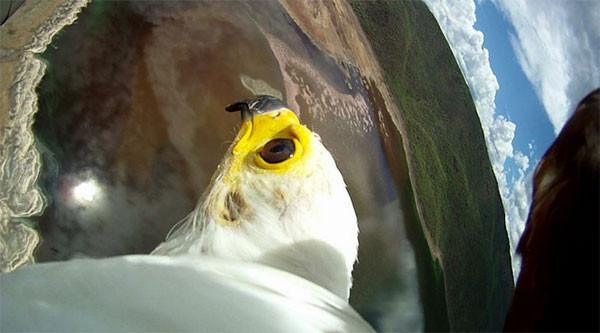 Kuşların gizemli yolculuğu