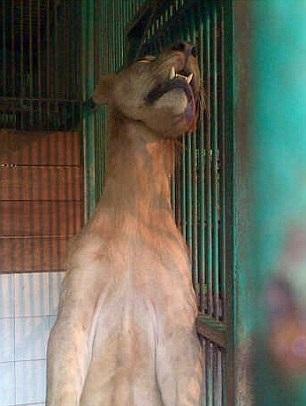 İçler acısı bir hayvanat bahçesi