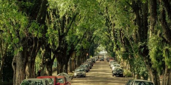 İddia ediyoruz böyle bir caddeyi hiç görmediniz