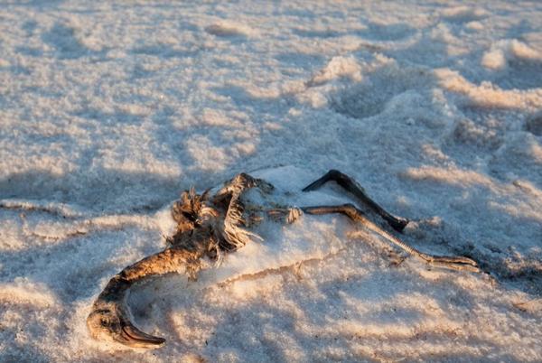Tuz Gölü de kuraklık alarmı veriyor