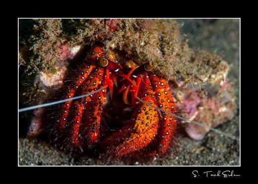 Nesli tehlike altındaki 14 deniz canlısı