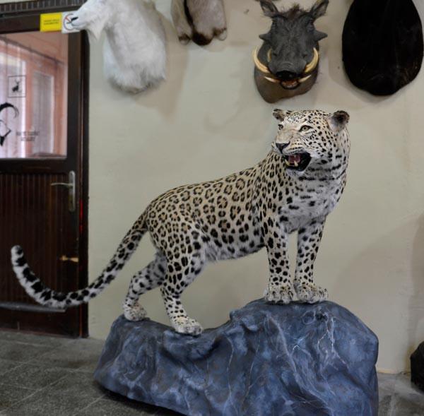 O leopar böyle ölümsüzleşti