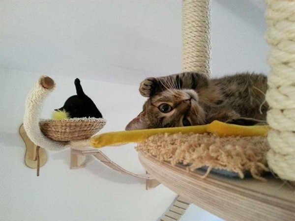 Kedi sarayı