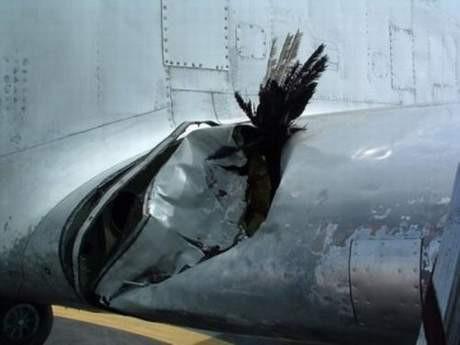 Kuşlar uçakları bu hale getiriyor