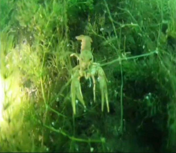 Sapanca Gölünün dibi de şoke etti!