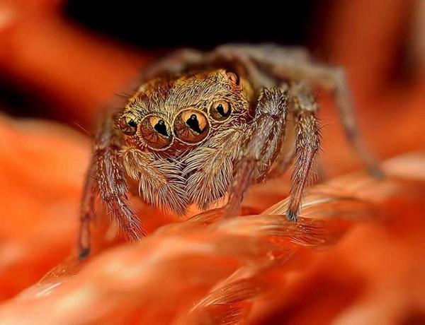 Örümcekten korkuyorsanız bu karelere bakmayın!