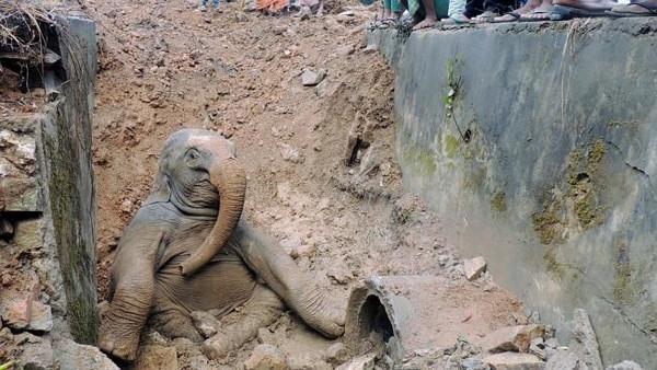 Yavru filin çaresizliği