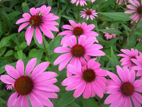 Bu çiçek her derde deva