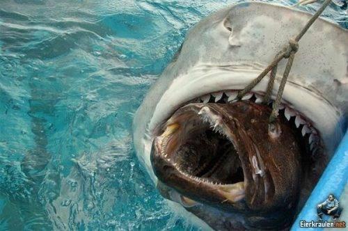 Denizden çıkan canavarlar