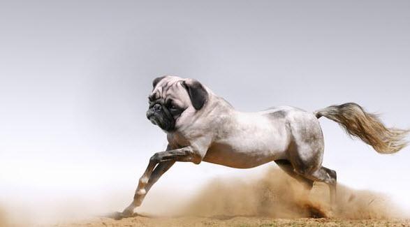 Hibrid hayvanlar alemi