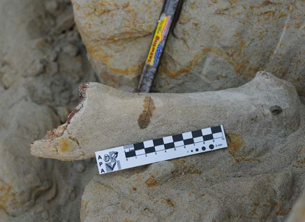 Şili'de 5 milyon yıllık sır ortaya çıktı