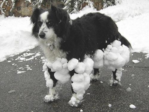 Cins değil 'çok cins' köpekler!
