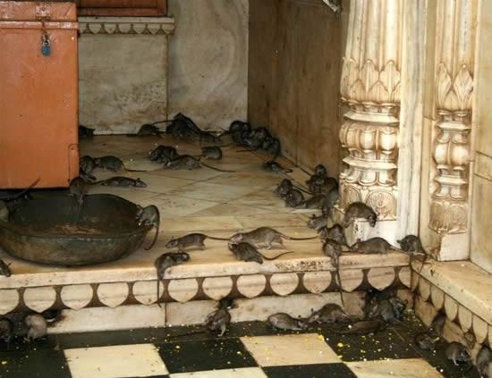 Karni Tapınağı'nın gerçek sahipleri