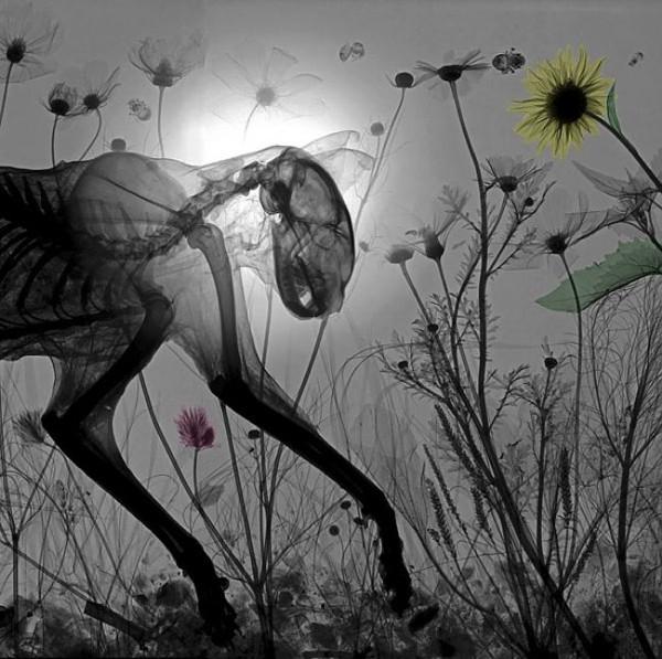 Hayvanların Röntgen Görüntüleri