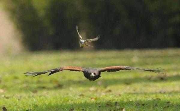 Küçük kuşun büyük cesareti