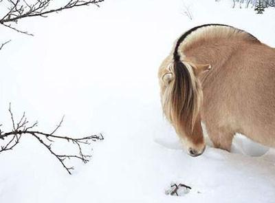 Fotojenik hayvanlar