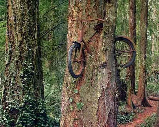 Bu ormanda olanlara inanamayacaksınız