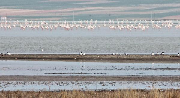 Kuş cenneti Seyfe Gölü kurudu