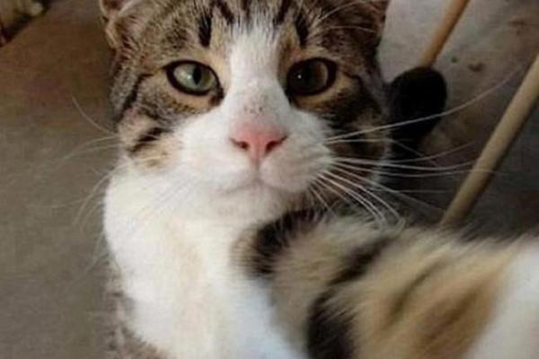 Kediler de selfie akımı rüzgarına kapıldı