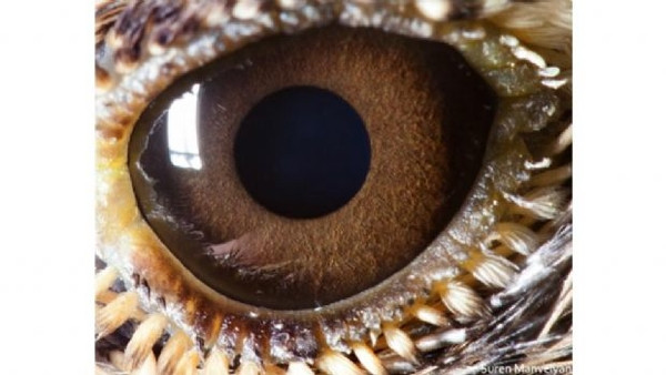 Bu hayvanları gözünden tanıyabilir misiniz?