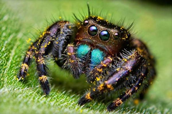 En sevimli örümcek!