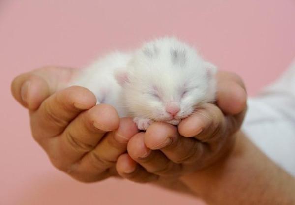 2014'ün ilk yavru kedileri