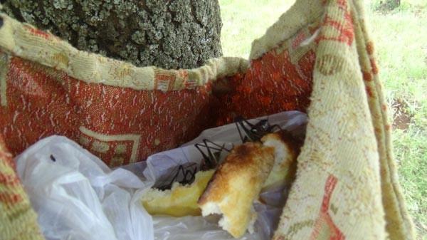 Diyarbakır Kulp'ta çekirge istilası
