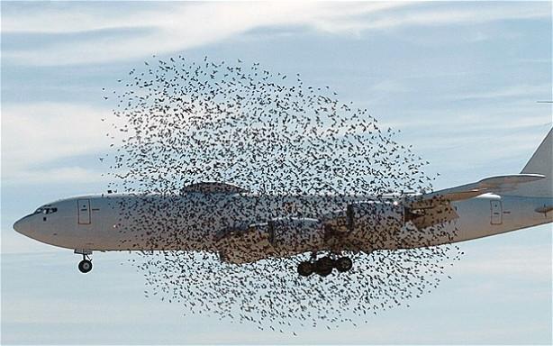 Bir uçak bir kuşa çarparsa ne olur?